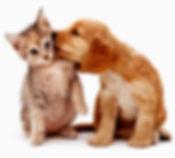 cão-e-gato-juntos.jpg