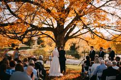 Fall Wedding under the Maple Tree