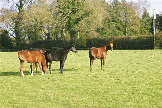Foals before sales