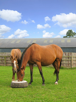 Mare & Foal Feeding