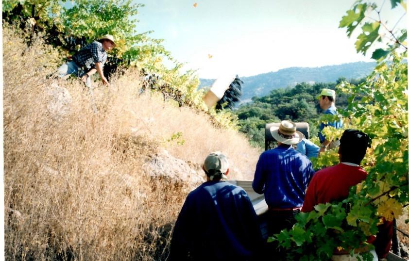 Hossfeld Vineyards, Henry Hossfeld at Harvest