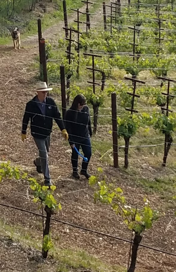 A typical morning for Hannah and her dad, Bryan walking in the vineyard with ranch dog, Parker.