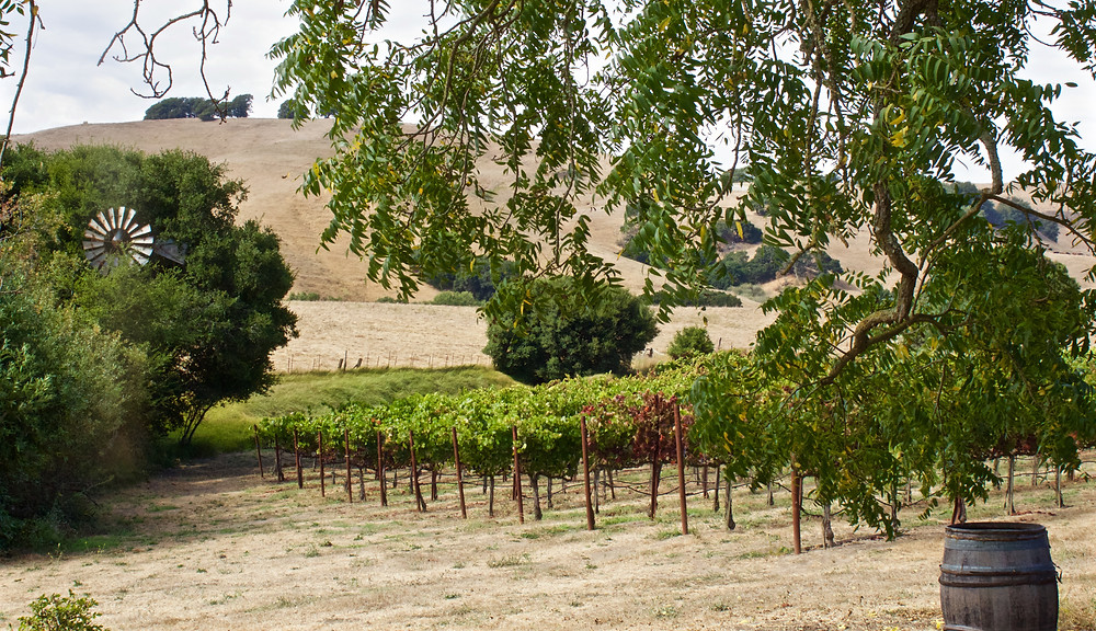 Small, family farms and vineyards in Napa County