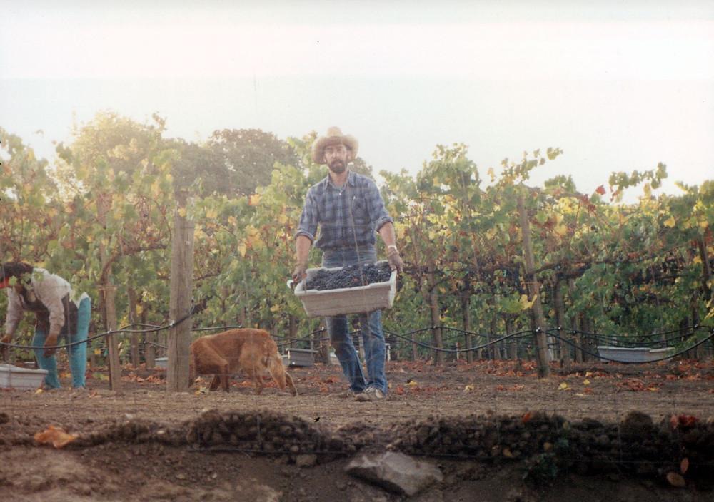 Ken Nerlove in the vineyard, 1987.