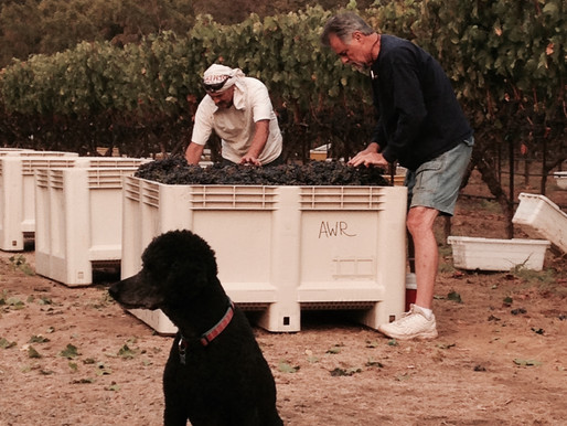 Endangered Species: Is There A Future For Small Family Farms In Napa Valley?