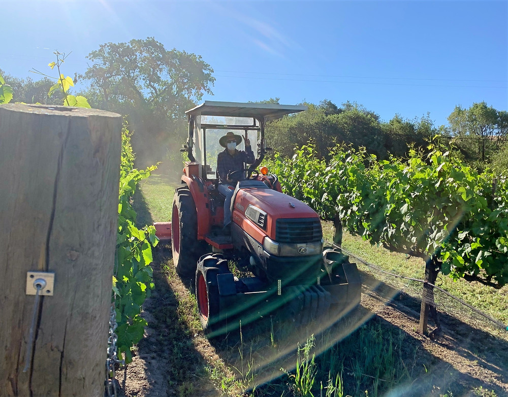 Elise mowing the family's Pinot Noir vineyard, May 2020.