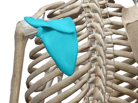 【1日6分でOK】徹底的に肩甲骨を動かす四つ這いトレーニング6種目!