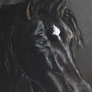 artwork-horse-portraite1.jpg