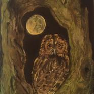 artwork-owl.jpg