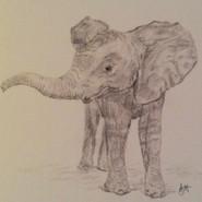 artwork-elephant.jpg