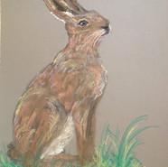 artwork-hare.JPG
