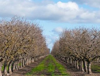 Fall Orchard Weed Management
