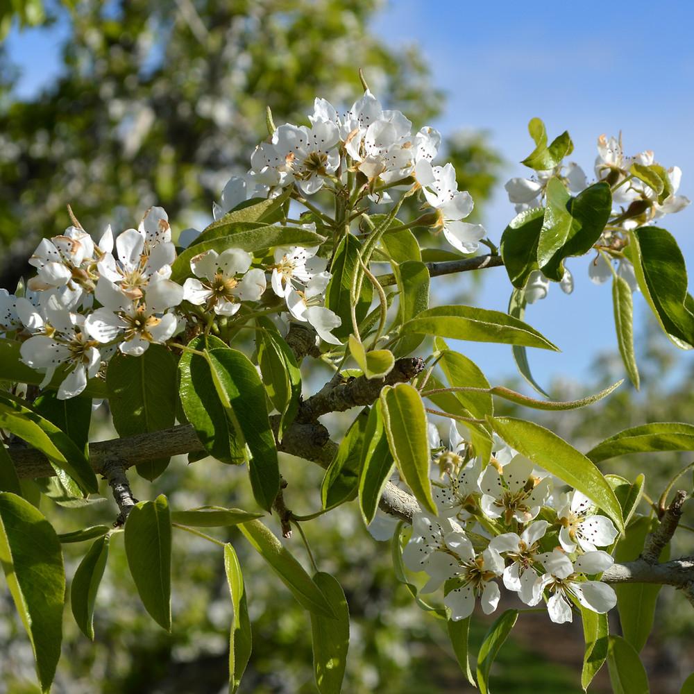 more blooms.jpg