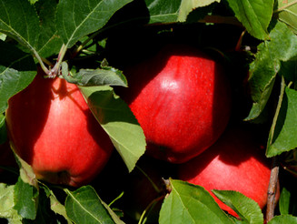 Wash. farmers post record income for third year in a row led by apples