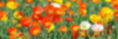 flori site.jpg