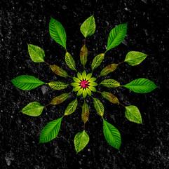mandala jardin_2.jpg