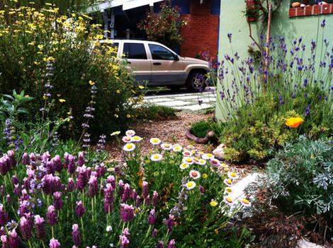Landscape Design in Mission Hills