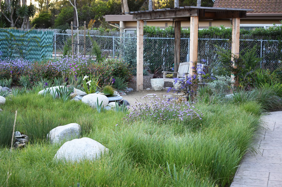 native meadow landscaping