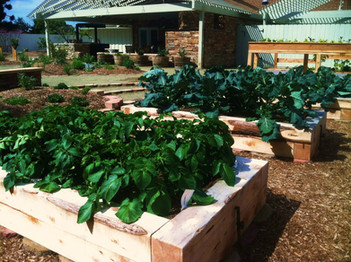 Community Center Vegetable Garden