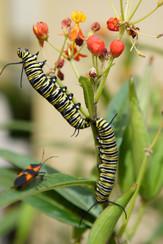 Butterfly Garden Design in Encinitas