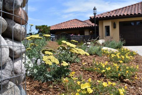 Colorful Landscape Design in Solana Beach