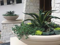 Succulent Planter Modern Design