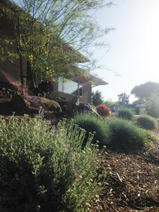 La Mesa Landscape Design