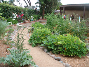 Vegetable Garden Design in University City, San Diego