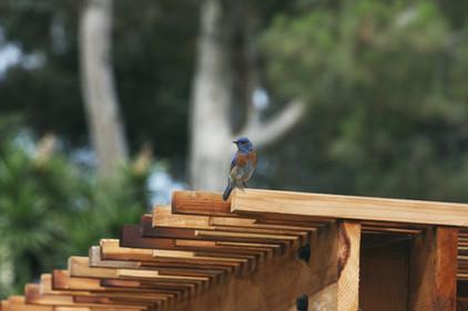 Bird Pirch