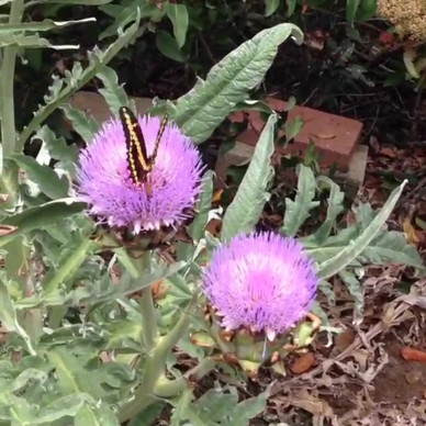 Pollinator Friendly Landscape