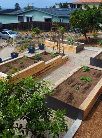 Cardiff Vegetable Garden