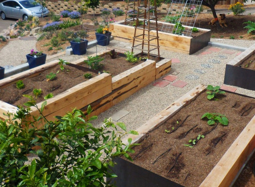 Backyard is Modern Victory Garden – San Diego Union Tribune