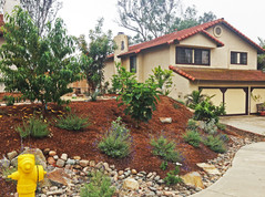 Scripps Ranch Drought Resistant Plants with Orchard Design