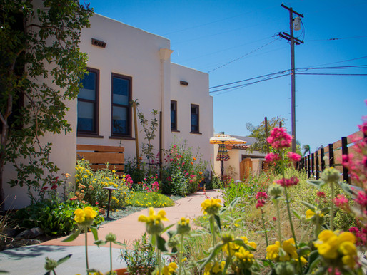 North Park Yard Goes Native - Revolution Featured in the UT!
