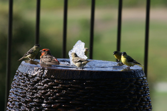 birds in fountain