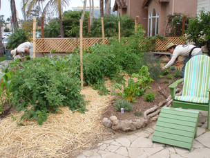 Organic Vegetable Garden Designer