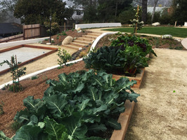 Vegetable Garden in Del Mar, CA