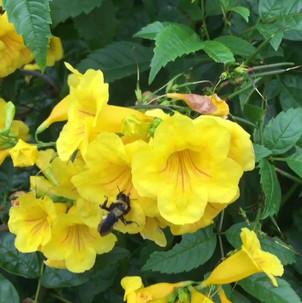 Bee Friendly Garden Design