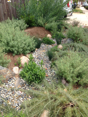 Riverbed Design with San Diego Native Plants