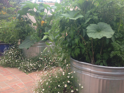 Galvenized Tub Vegetable Garden