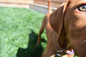 Dog Friendly Landscaping San Diego