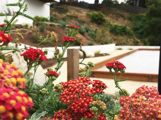 Colorful Plant Landscape Design
