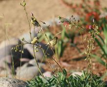 Bird Friendly Landscaping