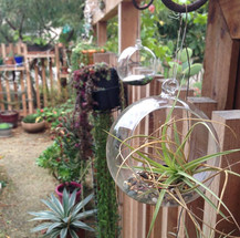 Air Plants in Landscape Design