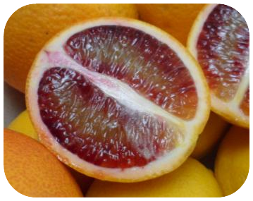 Tips for Citrus Tree Growers