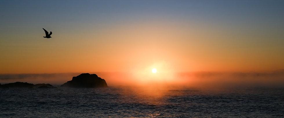 Lone gull at sunrise - Panorama