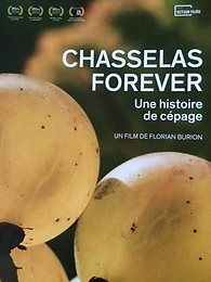 chasselas forever.png