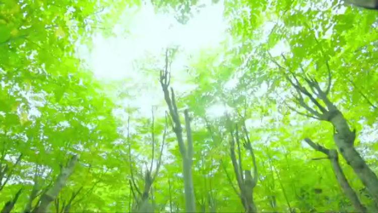 Moringa Gaia Indonesia
