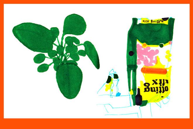 potting soil-patricia thomasson-web.jpg