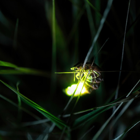 Lessons from the Lightning Bugs